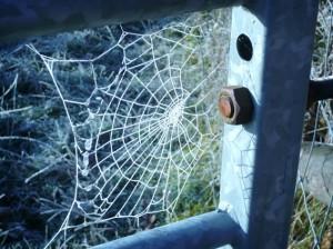 Frozen cobweb image