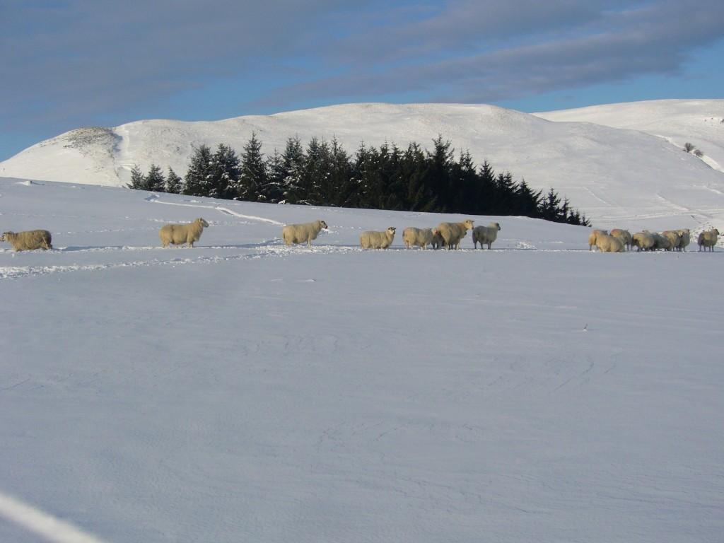 Winter January 2010